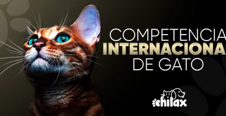 Competencias Internacionales de Gatos