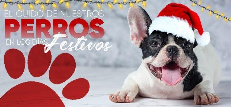 El Cuido de Nuestros Perros en los Días Festivos