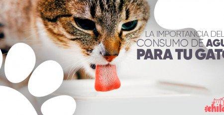 La importancia del consumo de agua para nuestros gatitos