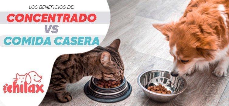Como alimentar a mi mascota