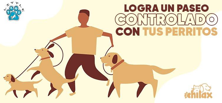 Cómo lograr un paseo controlado con tu perrito