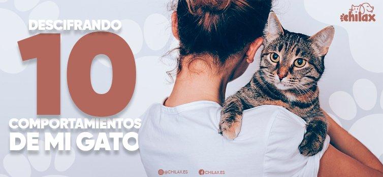 Descifrando 10 comportamientos del gato