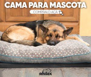 Como Cuidar a Perros de Raza Grande